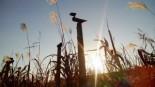 은빛 물결을 만나다 서천 신성리 갈대밭